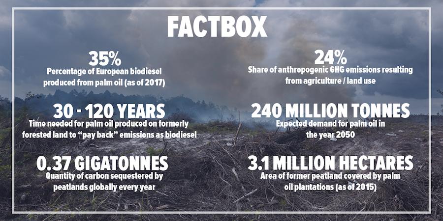 Palm oil biodiesel factbox