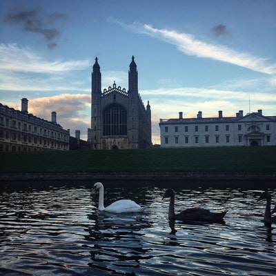 Punting with swans